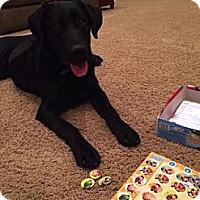 Adopt A Pet :: Joe Joe - Destrehan, LA