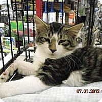 Adopt A Pet :: Hogan - Riverside, RI