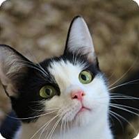 Adopt A Pet :: Drew - Alexandria, VA
