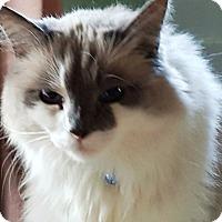 Adopt A Pet :: Boomy - Pasadena, CA