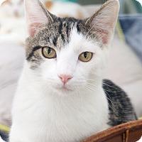 Adopt A Pet :: Hitchcock - St Louis, MO