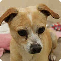 Adopt A Pet :: Theo - Only $45 adoption!!!!!! - Litchfield Park, AZ