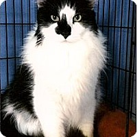 Adopt A Pet :: Star - Medway, MA