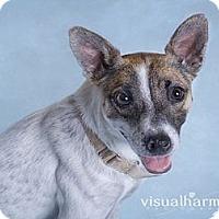Adopt A Pet :: Loretta - Phoenix, AZ