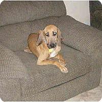 Adopt A Pet :: Paige - Phoenix, AZ