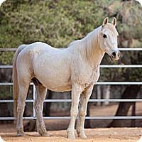 Adopt A Pet :: Boss - El Dorado Hills, CA