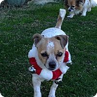 Adopt A Pet :: Ellie May - Scottsdale, AZ