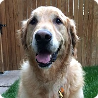 Adopt A Pet :: Tucker - Denver, CO