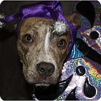 Adopt A Pet :: Alfalfa - Sunnyvale, CA