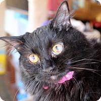 Adopt A Pet :: HELEN - Danville, KY