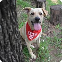 Adopt A Pet :: Banjo - Burleson, TX