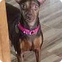 Adopt A Pet :: Jersie Girl - Columbus, OH