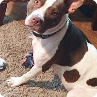 Adopt A Pet :: LAYLA - Nashville, TN
