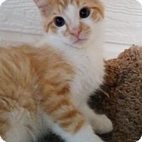 Adopt A Pet :: Custard - North Highlands, CA