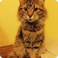 Adopt A Pet :: Flannery - Delmont, PA