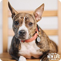 Adopt A Pet :: Buttercup - Portland, OR