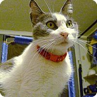 Adopt A Pet :: Mississippi - Oakland, CA