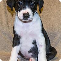 Adopt A Pet :: Emma - Bellevue, NE