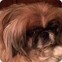 Adopt A Pet :: Sugar - Oakdale, TN