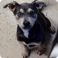 Adopt A Pet :: Ansley - Sylacauga, AL