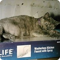 Adopt A Pet :: Sheena - Berkeley Hts, NJ