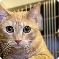 Adopt A Pet :: Mackenzie - Canoga Park, CA