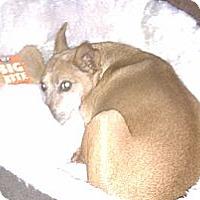 Adopt A Pet :: Sedona - Springvale, ME