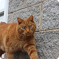 Adopt A Pet :: Oscar - Maxwelton, WV