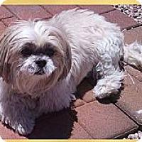 Adopt A Pet :: Girlfriend - Scottsdale, AZ