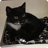Adopt A Pet :: Gatsbie - Troy, OH