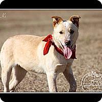 Adopt A Pet :: Ki - Albany, NY