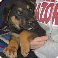 Adopt A Pet :: Riley - Salem, NH