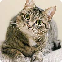 Adopt A Pet :: Tibby - Chicago, IL