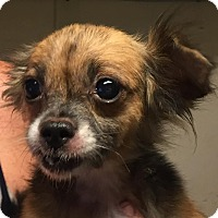 Adopt A Pet :: Genesis - Orlando, FL