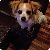 Adopt A Pet :: America - Meridian, ID