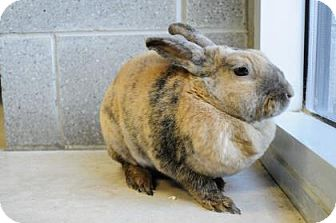 Dwarf Mix for adoption in Hamilton, Ontario - Buddy