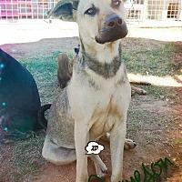 Adopt A Pet :: Jameson - Odessa, TX