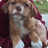 Adopt A Pet :: Lakota - PLAINFIELD, IN