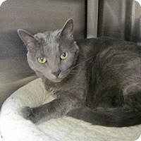 Adopt A Pet :: Punkin - Grand Junction, CO
