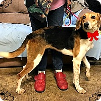 Adopt A Pet :: HAPPY HOUND - Mt. Laurel, NJ