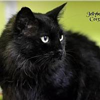 Adopt A Pet :: Jellybean - Montgomery, TX