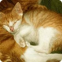 Adopt A Pet :: Nod - Pittstown, NJ