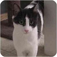 Adopt A Pet :: CiCi - Phoenix, AZ