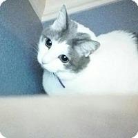 Adopt A Pet :: Gracie - Sacramento, CA