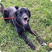 Adopt A Pet :: Puck - New Canaan, CT