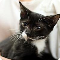 Adopt A Pet :: Ace - New York, NY