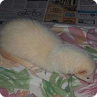 Adopt A Pet :: Ty - Acworth, GA