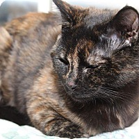 Adopt A Pet :: Cleo - Media, PA