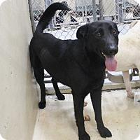 Adopt A Pet :: A16 Drago - Odessa, TX