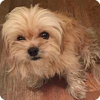 Adopt A Pet :: Lex Luther - Savannah, GA